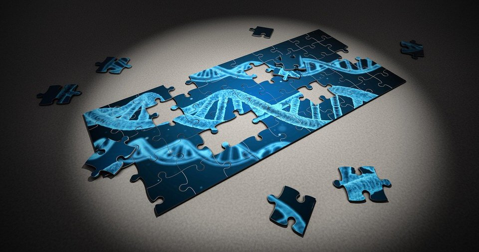 shun's article picture - puzzle dna
