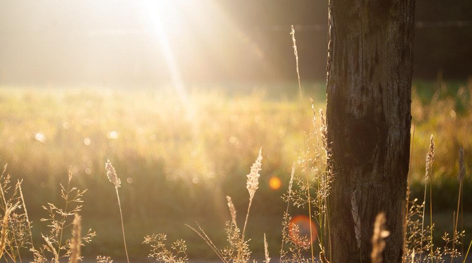 shun's article picture - sun sun sun