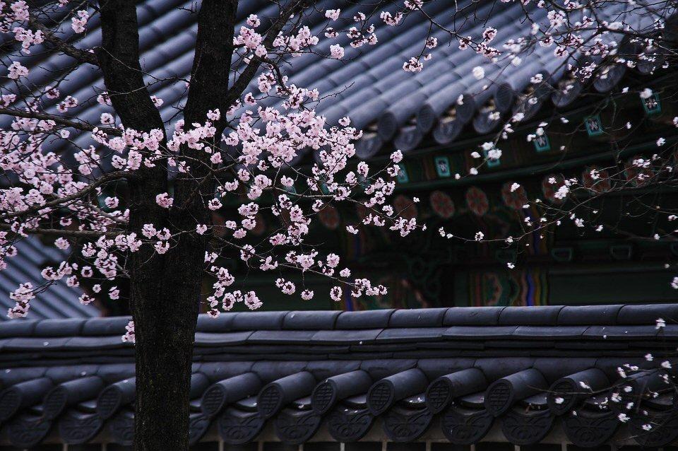 shun's article picture - plum blossom