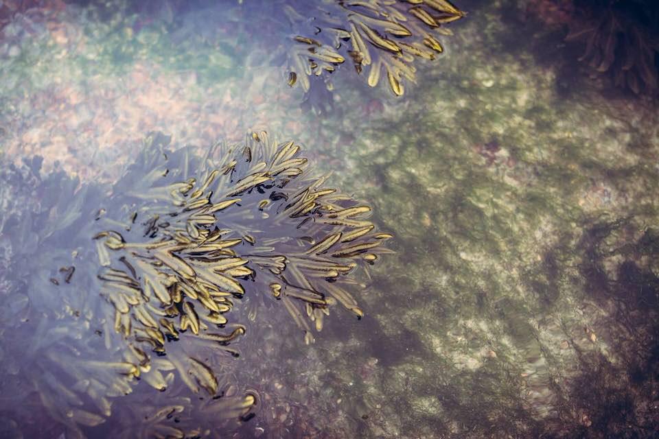 shun's article picture - euglena sample