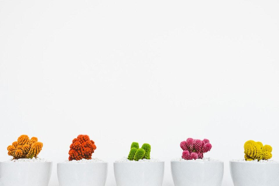 shun's article picture - design flower
