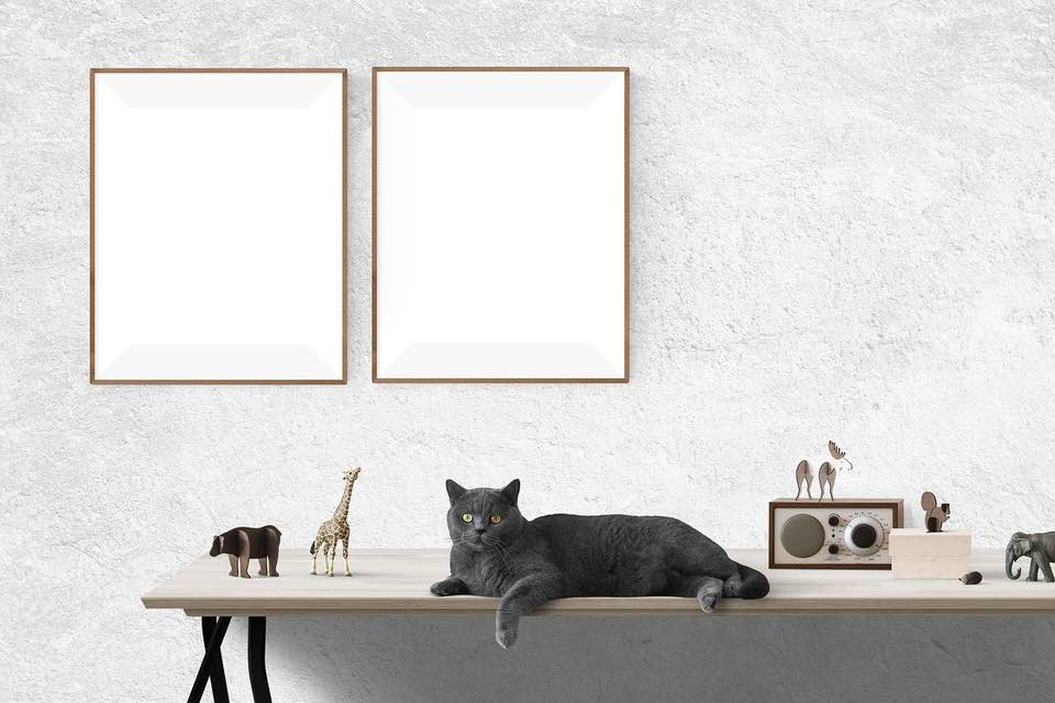 shun's article picture - cat on the table