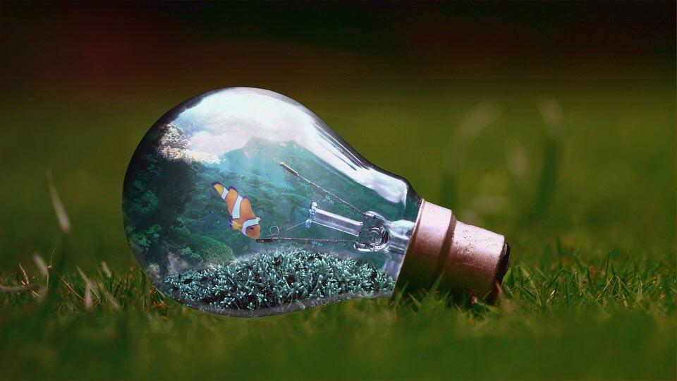 shun's article picture - light bulb in the sea