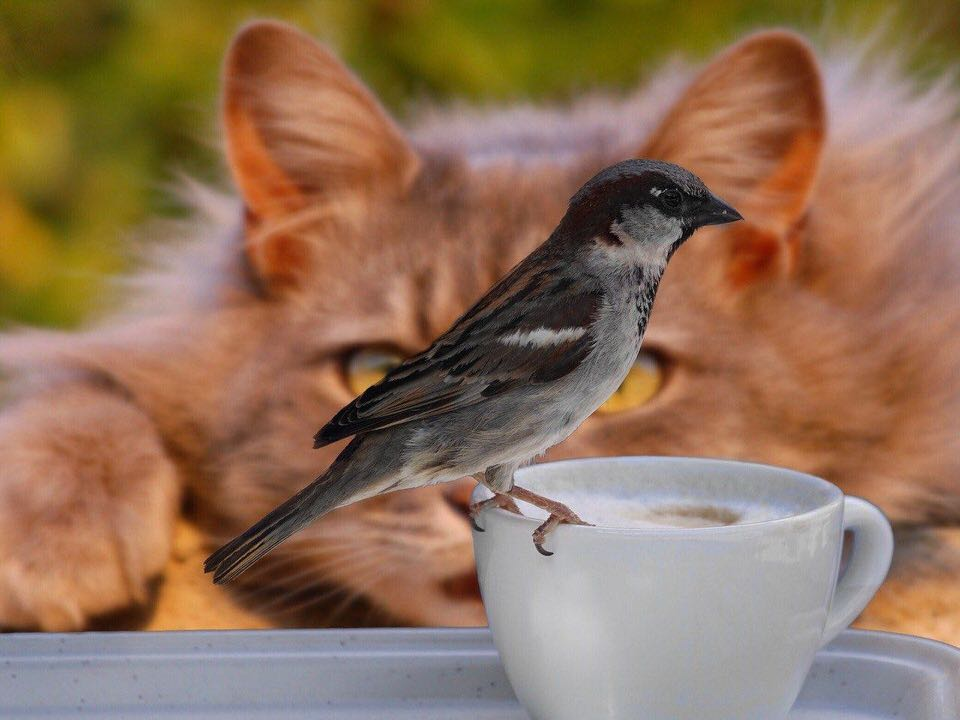 shun's article picture - cat hunting bird