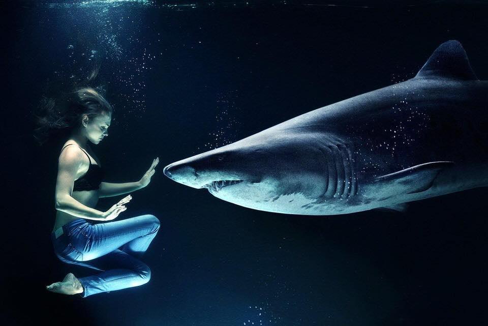 shun's article picture - shark hunt human