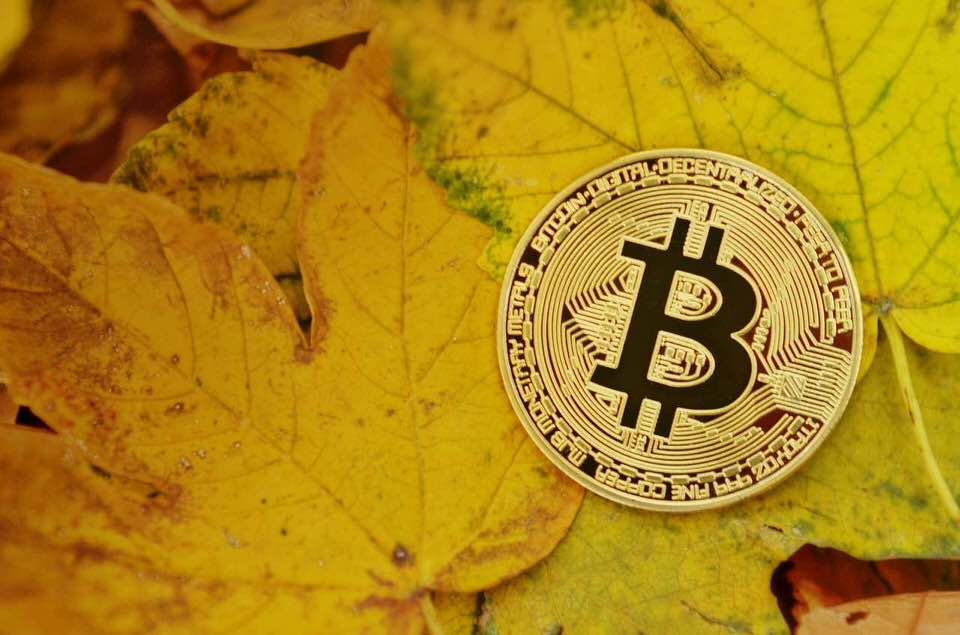 shun's article picture - bitcoin and leaf