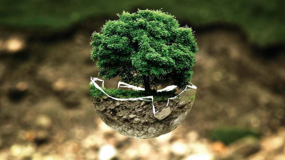 shun's article picture - environmental tree protect