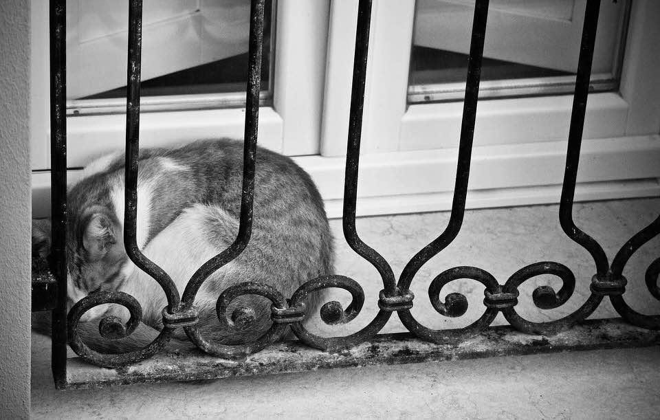 shun's article picture - cat siesta