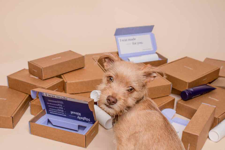 shun's article picture - subscription dog
