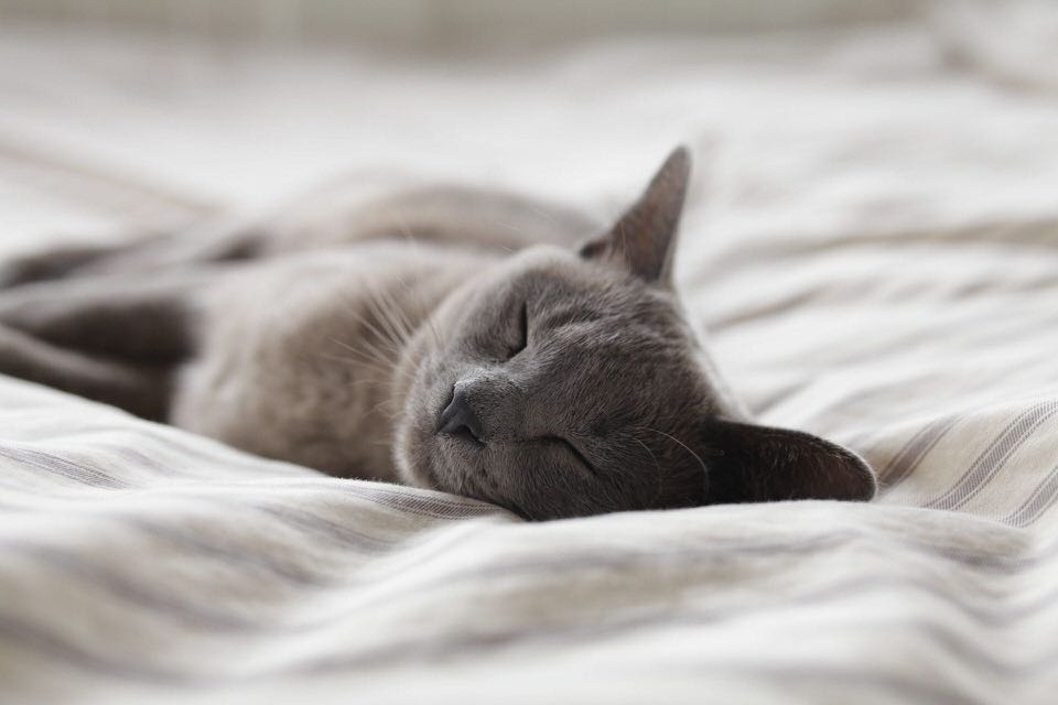 shun's article picture - sleeping cat