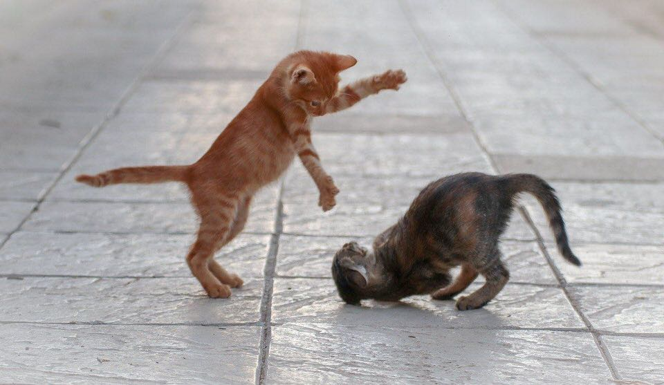 shun's article picture - battle mini cats